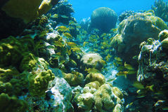 undervattens- rev Arkivfoton