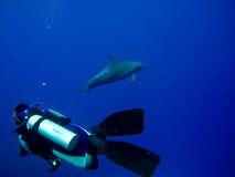undervattens- scuba för dykaredelfinencounter Arkivbild