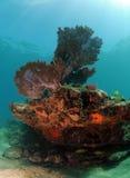 Undervattens- seascape med havet fläktar, hård korall och mjuk korall Royaltyfria Bilder