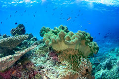 Undervattens- seascape med slapp korall Royaltyfria Bilder