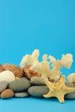 undervattens- set sjöstjärna för objekthav Arkivfoto