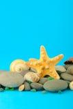 undervattens- set sjöstjärna för objekthav Royaltyfria Foton