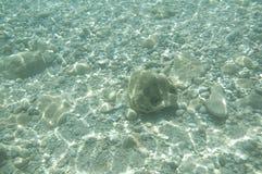 Undervattens- sikt Arkivbild