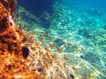 Undervattens- sikt av det blåa Adriatiskt havet Arkivfoton