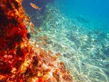 Undervattens- sikt av det blåa Adriatiskt havet Royaltyfri Foto