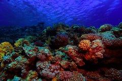 Undervattens- sikt i havet Royaltyfria Foton