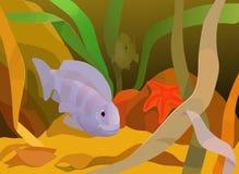 Undervattens- sikt med havsväxter, fiskar och sjöstjärnan Royaltyfri Bild