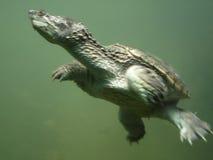 undervattens- sköldpadda Royaltyfri Foto