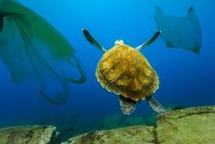 Undervattens- sköldpadda som svävar bland plastpåsar Begrepp av förorening av vattenmiljön royaltyfri fotografi