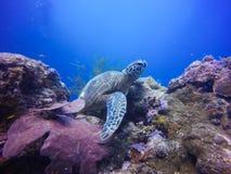 Undervattens- sköldpaddahav Royaltyfria Foton