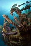undervattens- skeppsbrott Royaltyfri Fotografi
