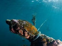 Undervattens- skeppsbrott royaltyfri bild