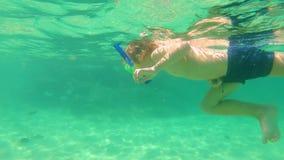 undervattens- skott 4k av en gullig pys som snorklar med en maskering och ett rör i ett tropiskt hav med massor av tropiska fiska lager videofilmer