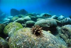 Undervattens- stenblockbank Royaltyfria Bilder