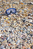 undervattens- strandgoggles Royaltyfri Fotografi