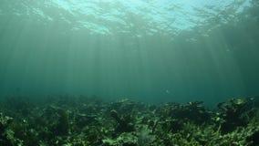 Undervattens- sunburst arkivfilmer