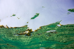 Undervattens- textur och faunor i det Ionian havet Arkivfoton