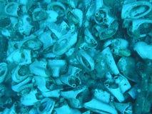 undervattens- toaletter Arkivbild