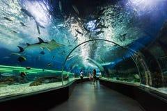Undervattens- tunnel fotografering för bildbyråer