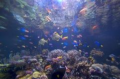 undervattens- underland royaltyfri fotografi
