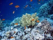 undervattens- värld royaltyfria bilder