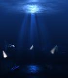 undervattens- värld royaltyfria foton