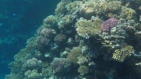 Undervattens- värld av Röda havet i Egypten stock video