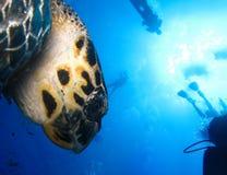 Undervattens- värld i djupt vatten i flora för korallrev och växtnaturi marin- djurliv för blå värld, havhavsdyk Fiskar sköldpadd arkivfoton