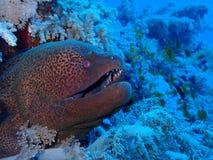 Undervattens- värld i djupt vatten i korallrev och växtblommaflora i marin- djurliv för blå värld, fisk, koraller och havsvarelse royaltyfria bilder