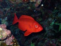 Undervattens- värld i djupt vatten i korallrev och växtblommaflora i marin- djurliv för blå värld, fisk, koraller och havsvarelse royaltyfri foto