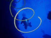 Undervattens- värld i djupt vatten i korallrev och växtblommaflora i marin- djurliv för blå värld, fisk, koraller och havsvarelse royaltyfri fotografi