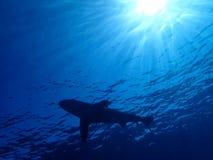 Undervattens- värld i djupt vatten i korallrev och växtblommaflora i marin- djurliv för blå värld, fisk, koraller och havsvarelse arkivbilder