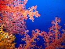Undervattens- värld i djupt vatten i korallrev och växtblommaflora i marin- djurliv för blå värld, fisk, koraller och havsvarelse arkivfoto