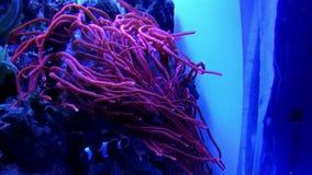 Undervattens- värld i oceanarium arkivfilmer