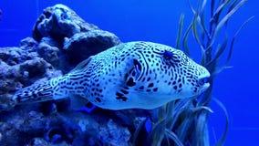 Undervattens- värld i oceanarium lager videofilmer