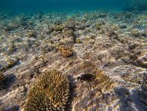 Undervattens- värld med korall och den tropiska fisken royaltyfri bild