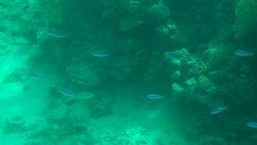 Undervattens- värld med koraller och den lilla fisken som är långsamma arkivfilmer