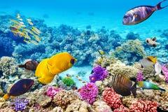 Undervattens- värld med koraller och den tropiska fisken Arkivfoto