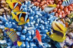 Undervattens- värld med koraller och den tropiska fisken Royaltyfria Foton