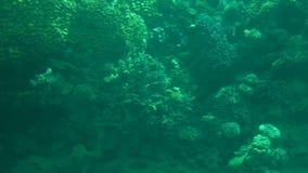 Undervattens- värld med koraller och den tropiska fisken arkivfilmer
