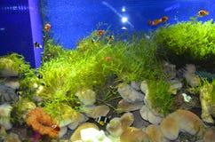 Undervattens- värld, mystisk fisk royaltyfri fotografi