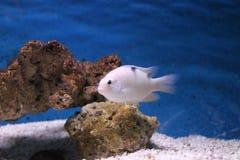 Undervattens- världsakvarium arkivbild