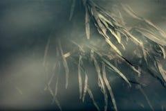 Undervattens- växter av floden Arkivfoto