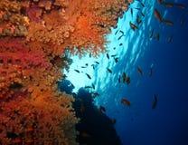 Undervattens- v?rld i djupt vatten i korallrev och v?xtblommaflora i marin- djurliv f?r bl? v?rld, fisk, koraller, delfin fotografering för bildbyråer