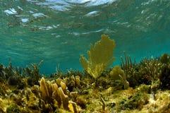 Undervattens- vatten- landskap med havsfans Arkivbild