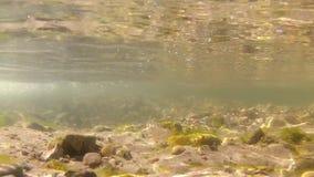 Undervattens- video av den sötvattens- strömmen arkivfilmer