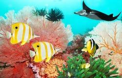 undervattens- värld Arkivbilder