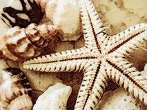 undervattens- värld Arkivfoto
