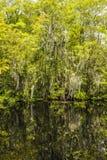 Undervegetation och rotar av mangrove Fotografering för Bildbyråer