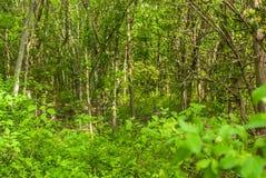 Undervegetation tungt skogsbevuxna Texas Arkivbilder